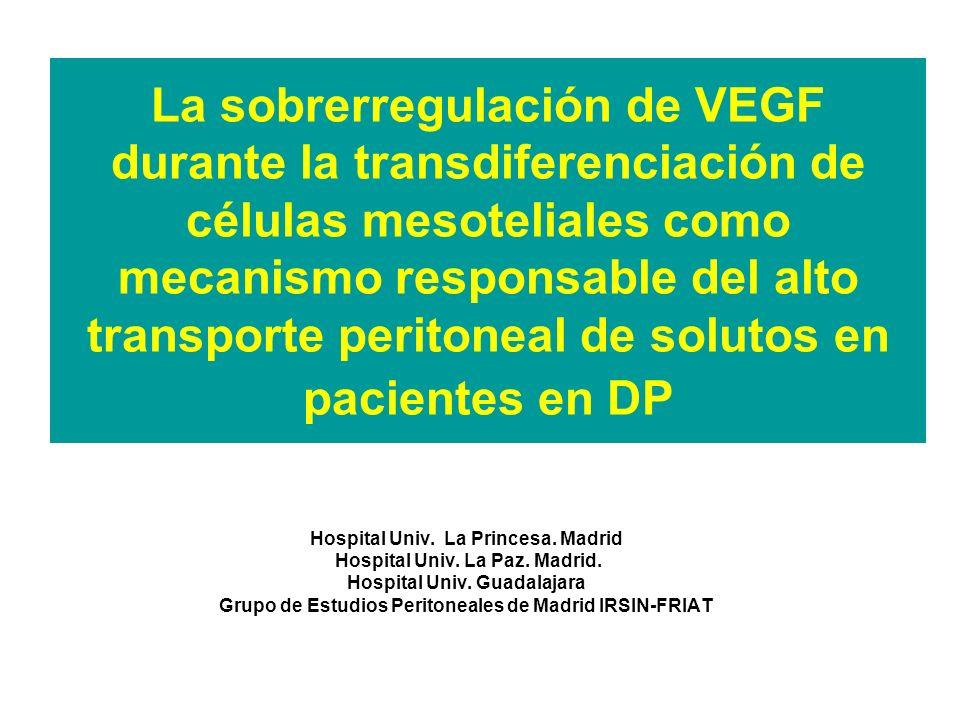 La sobrerregulación de VEGF durante la transdiferenciación de células mesoteliales como mecanismo responsable del alto transporte peritoneal de soluto