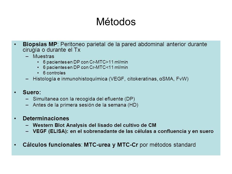 Métodos Biopsias MP: Peritoneo parietal de la pared abdominal anterior durante cirugía o durante el Tx –Muestras 6 pacientes en DP con Cr-MTC>11 ml/mi