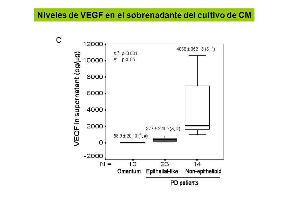 Niveles de VEGF en el sobrenadante del cultivo de CM