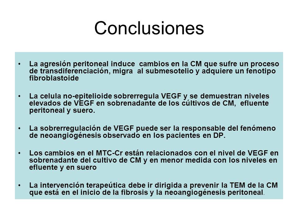 Conclusiones La agresión peritoneal induce cambios en la CM que sufre un proceso de transdiferenciación, migra al submesotelio y adquiere un fenotipo
