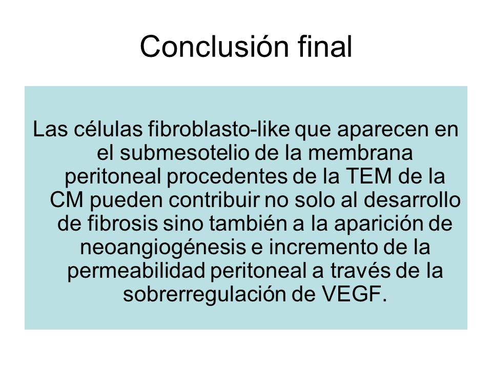 Conclusión final Las células fibroblasto-like que aparecen en el submesotelio de la membrana peritoneal procedentes de la TEM de la CM pueden contribu