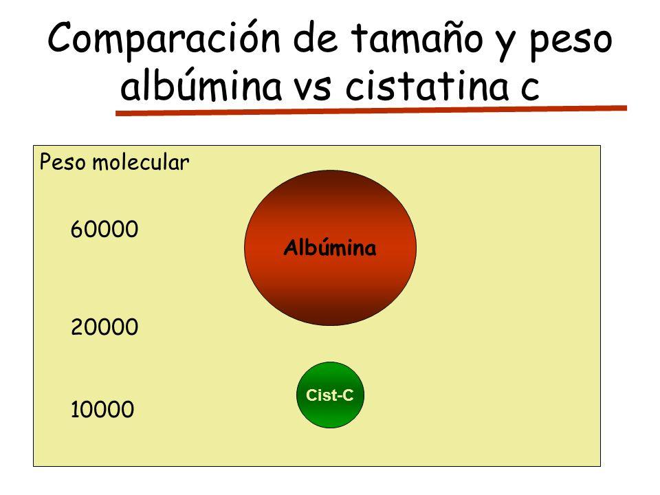 Comparación de tamaño y peso albúmina vs cistatina c Albúmina Cist-C Peso molecular 60000 20000 10000