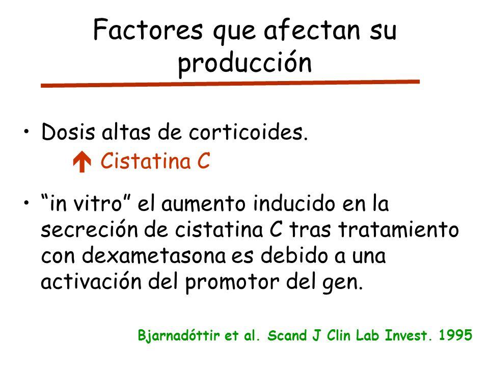 Factores que afectan su producción Dosis altas de corticoides. Cistatina C in vitro el aumento inducido en la secreción de cistatina C tras tratamient