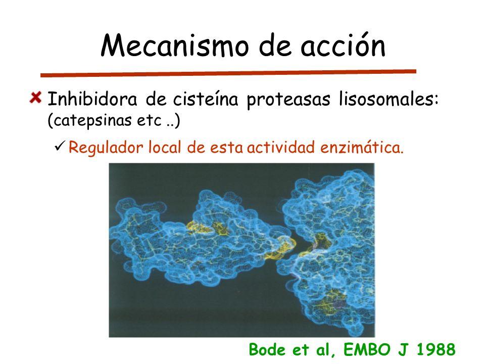 Para mujeres y hombres Constante a partir del primer año de vida hasta la vejez La disminucion de la funcion renal a partir de los 50 años es paralela al aumento de la Cistatina.