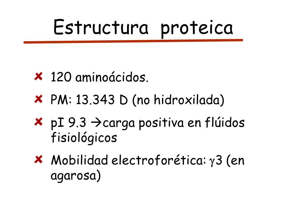 Estructura proteica 120 aminoácidos. PM: 13.343 D (no hidroxilada) pI 9.3 carga positiva en flúidos fisiológicos Mobilidad electroforética: 3 (en agar