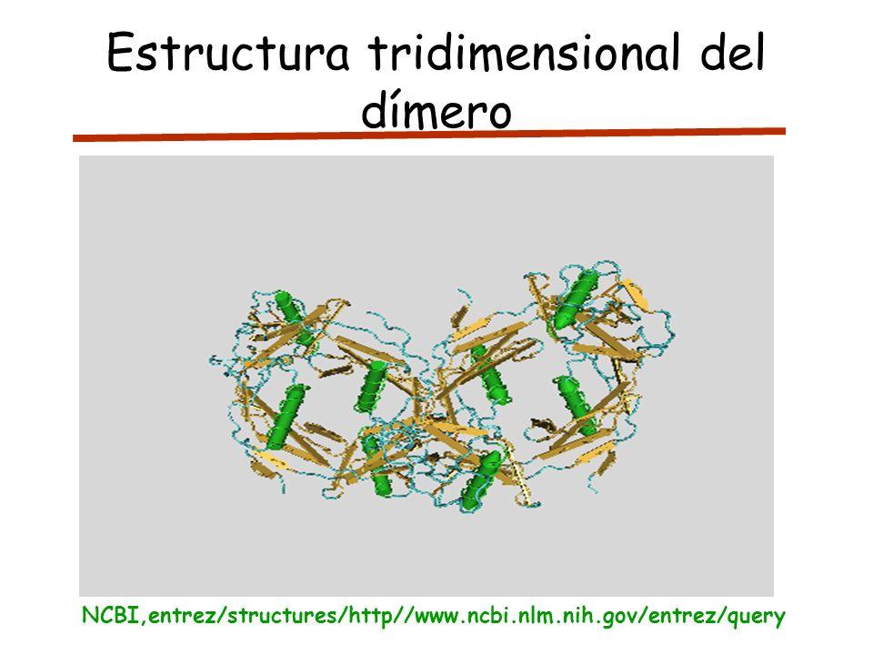 Estructura tridimensional del dímero NCBI,entrez/structures/http//www.ncbi.nlm.nih.gov/entrez/query
