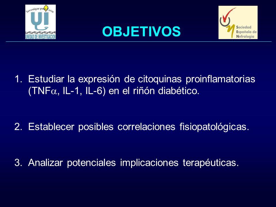 OBJETIVOS 1.Estudiar la expresión de citoquinas proinflamatorias (TNF, IL-1, IL-6) en el riñón diabético. 2.Establecer posibles correlaciones fisiopat