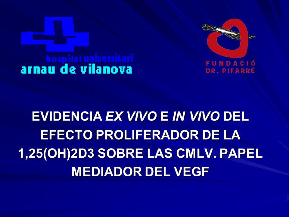 EVIDENCIA EX VIVO E IN VIVO DEL EFECTO PROLIFERADOR DE LA 1,25(OH)2D3 SOBRE LAS CMLV. PAPEL MEDIADOR DEL VEGF