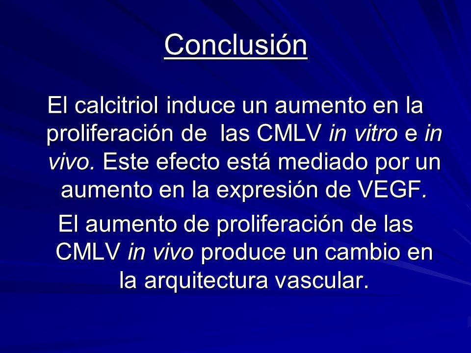 Conclusión El calcitriol induce un aumento en la proliferación de las CMLV in vitro e in vivo. Este efecto está mediado por un aumento en la expresión