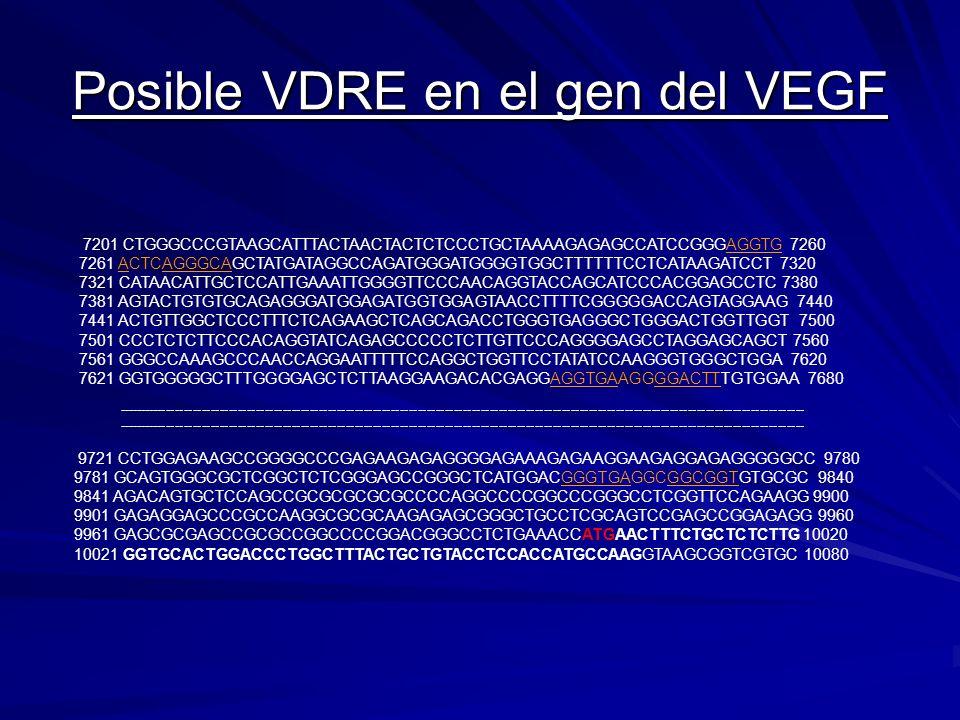 Posible VDRE en el gen del VEGF 9721 CCTGGAGAAGCCGGGGCCCGAGAAGAGAGGGGAGAAAGAGAAGGAAGAGGAGAGGGGGCC 9780 9781 GCAGTGGGCGCTCGGCTCTCGGGAGCCGGGCTCATGGACGGG