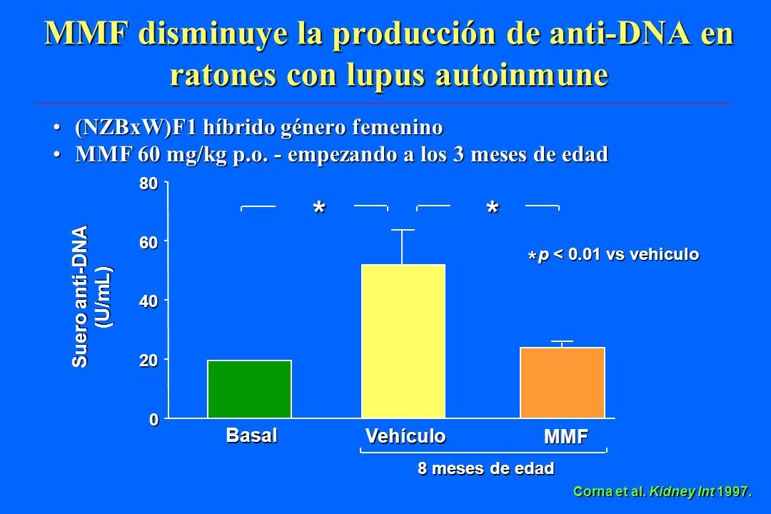 Corna et al. Kidney Int 1997. 0 20 40 60 80 Basal Vehículo Suero anti-DNA (U/mL) 8 meses de edad MMF * * p < 0.01 vs vehiculo * p < 0.01 vs vehiculo M