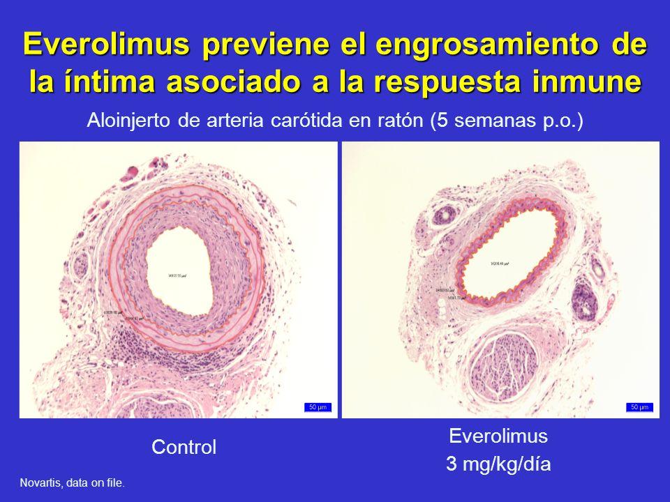 Everolimus previene el engrosamiento de la íntima asociado a la respuesta inmune Control Everolimus 3 mg/kg/día Aloinjerto de arteria carótida en rató