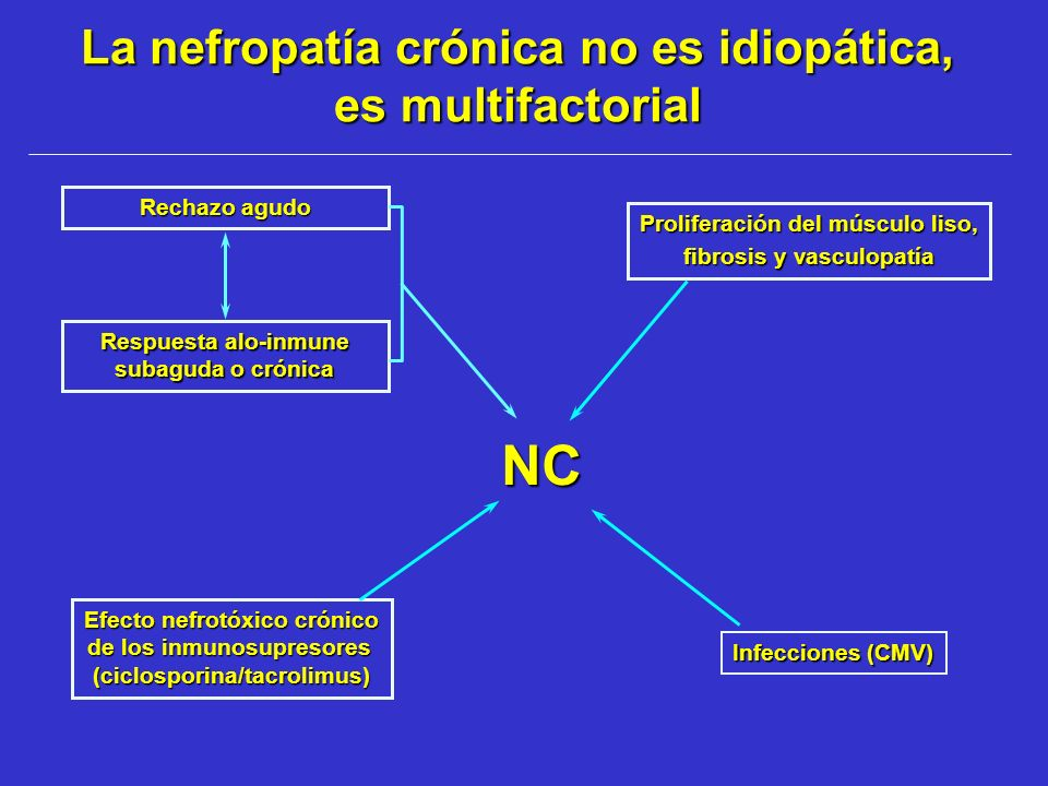 La nefropatía crónica no es idiopática, es multifactorial Rechazo agudo Respuesta alo-inmune subaguda o crónica NC Proliferación del músculo liso, fib