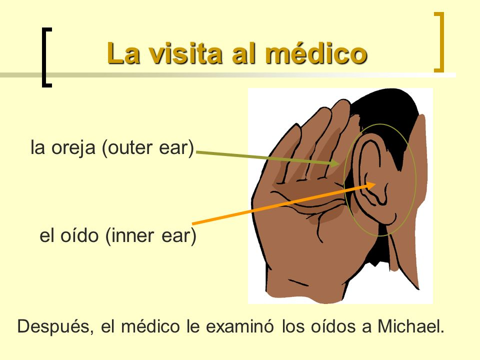 La visita al médico el oído (inner ear) la oreja (outer ear) Después, el médico le examinó los oídos a Michael.