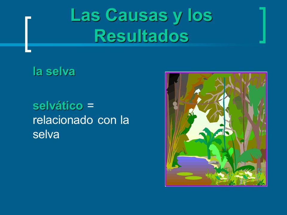 Las Causas y los Resultados la selva selvático selvático = relacionado con la selva