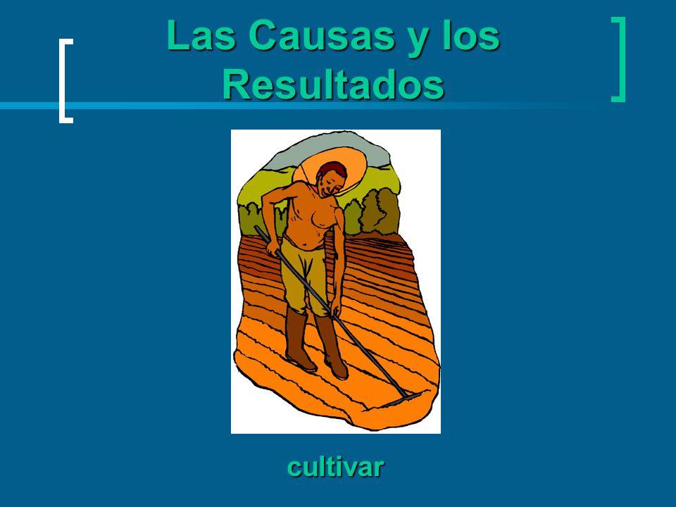 Las Causas y los Resultados cultivar