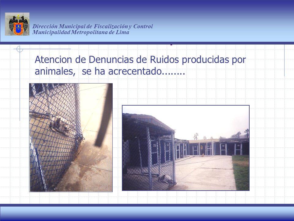 Haga clic para modificar el estilo de título del patrón Dirección Municipal de Fiscalización y Control Municipalidad Metropolitana de Lima 7 Atencion de Denuncias de Ruidos producidas por animales, se ha acrecentado........