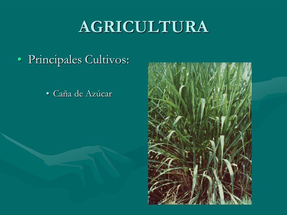 AGRICULTURA Principales Cultivos:Principales Cultivos: Caña de AzúcarCaña de Azúcar