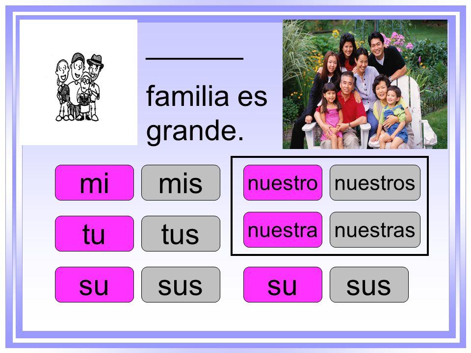 tu su nuestro su nuestra mimis tus sus nuestros sus nuestras ______ familia es grande.