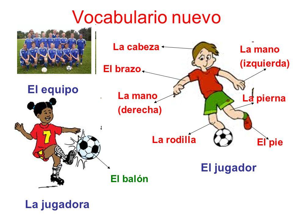 Vocabulario nuevo El equipo El jugador La jugadora La cabeza La mano (izquierda) La pierna El pie La rodilla La mano (derecha) El brazo El balón