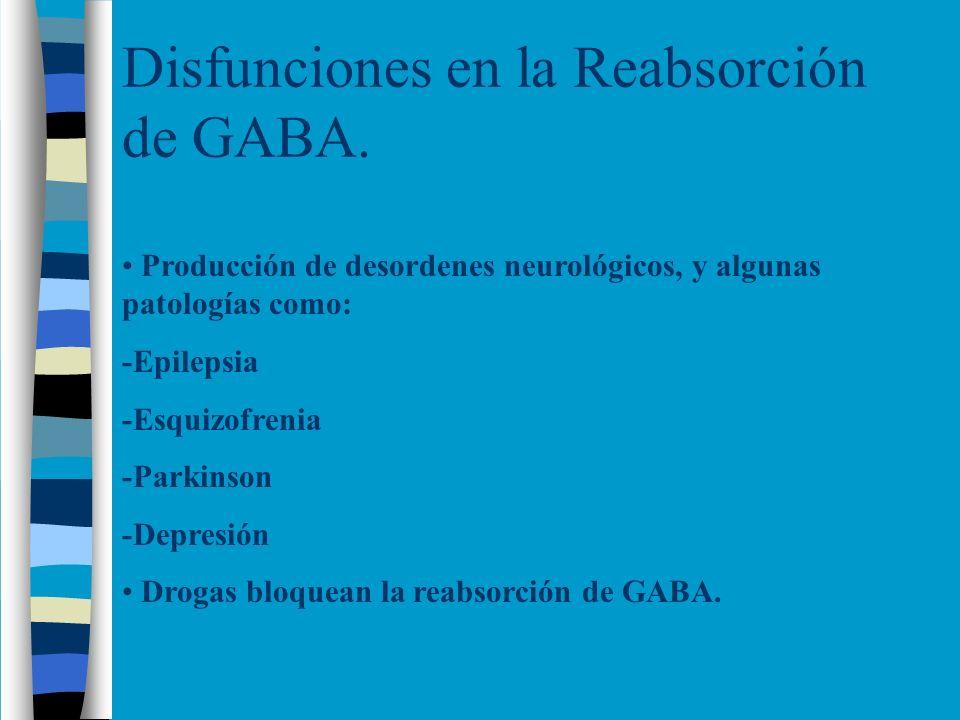 Disfunciones en la Reabsorción de GABA. Producción de desordenes neurológicos, y algunas patologías como: -Epilepsia -Esquizofrenia -Parkinson -Depres