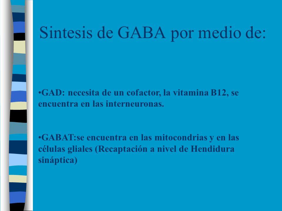Sintesis de GABA por medio de: GAD: necesita de un cofactor, la vitamina B12, se encuentra en las interneuronas. GABAT:se encuentra en las mitocondria