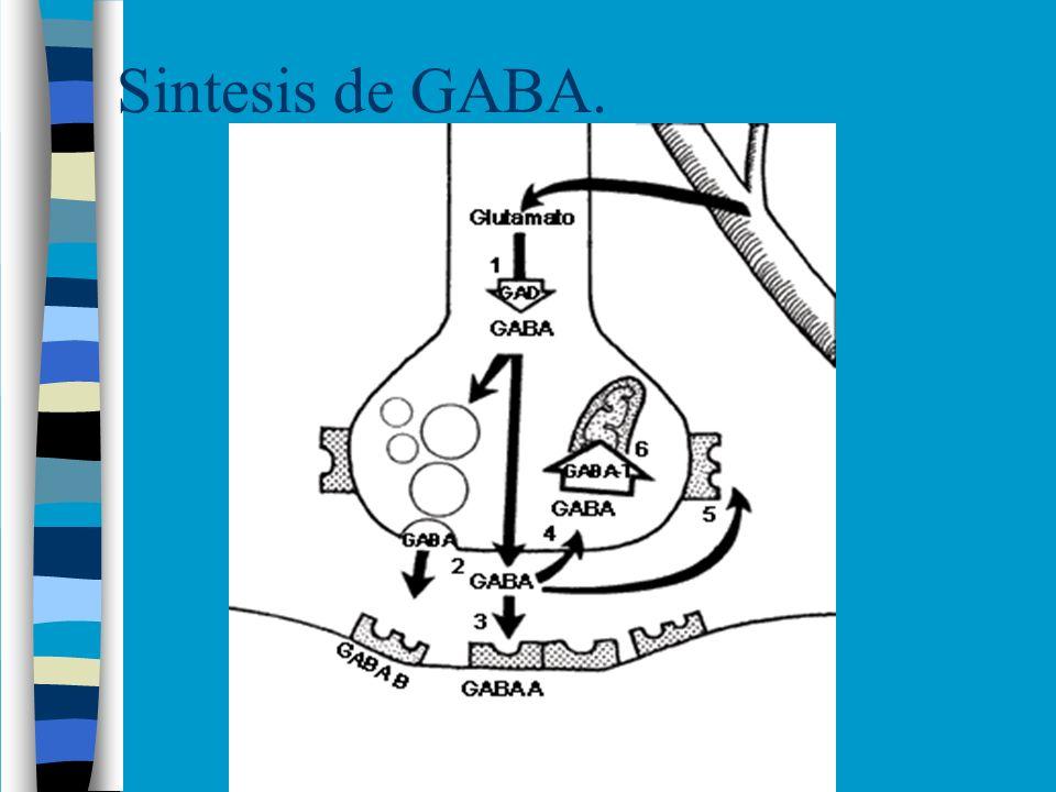 Receptores de GABA.