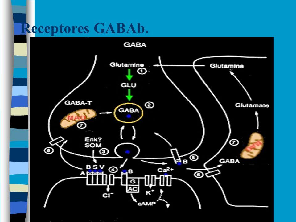 Reabsorción de GABA.Reabsorción asegura: 1.Precisión espacial y temporal de la señalización.