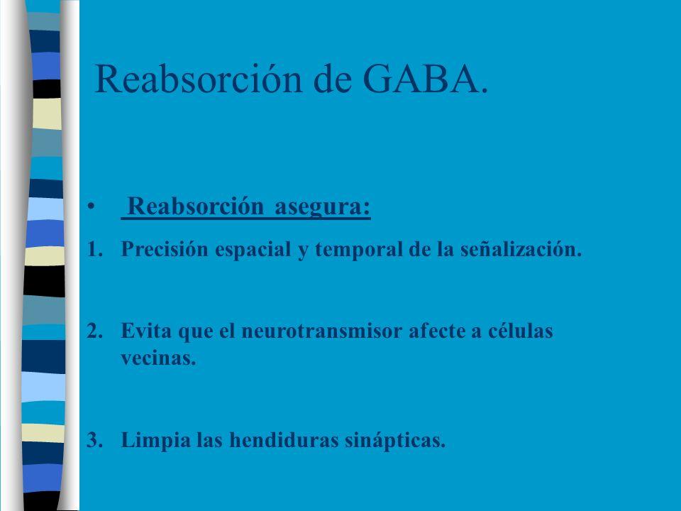 Reabsorción de GABA. Reabsorción asegura: 1.Precisión espacial y temporal de la señalización. 2.Evita que el neurotransmisor afecte a células vecinas.