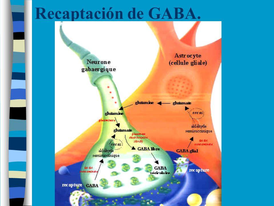 Disfunciones en la Reabsorción de GABA.