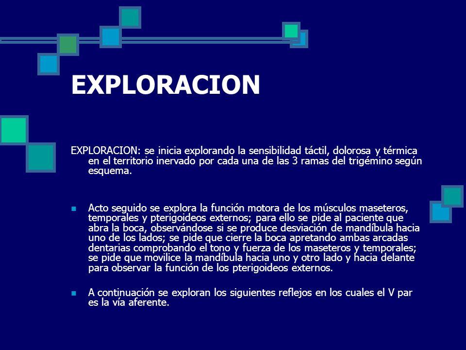 EXPLORACION EXPLORACION: se inicia explorando la sensibilidad táctil, dolorosa y térmica en el territorio inervado por cada una de las 3 ramas del tri