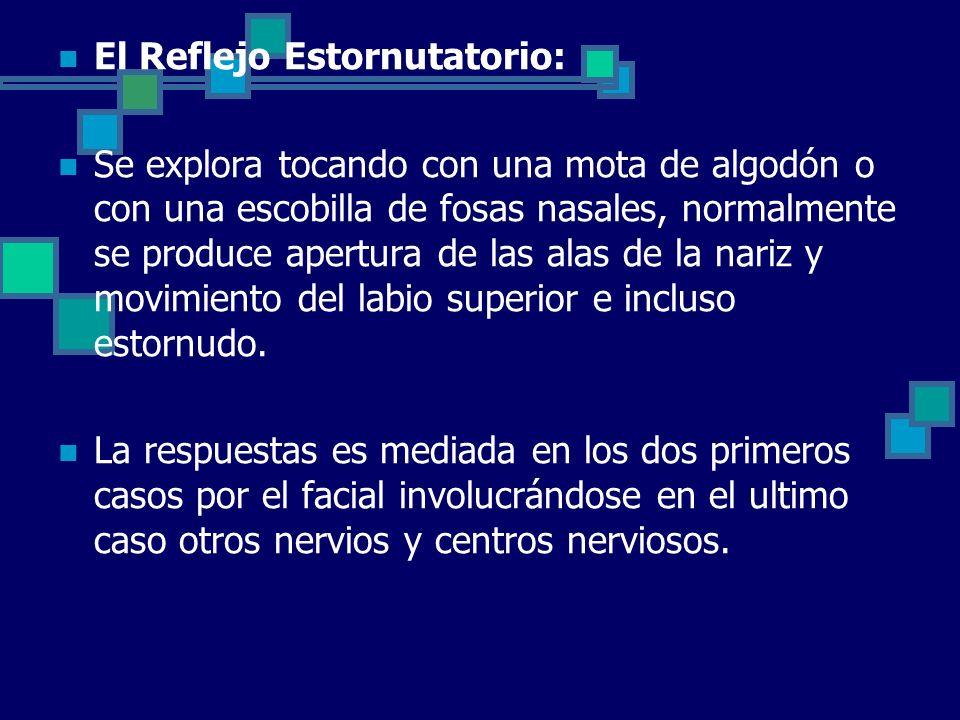 El Reflejo Estornutatorio: Se explora tocando con una mota de algodón o con una escobilla de fosas nasales, normalmente se produce apertura de las ala