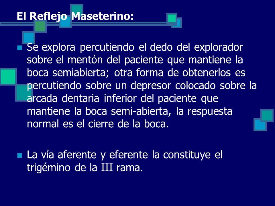 El Reflejo Maseterino: Se explora percutiendo el dedo del explorador sobre el mentón del paciente que mantiene la boca semiabierta; otra forma de obte