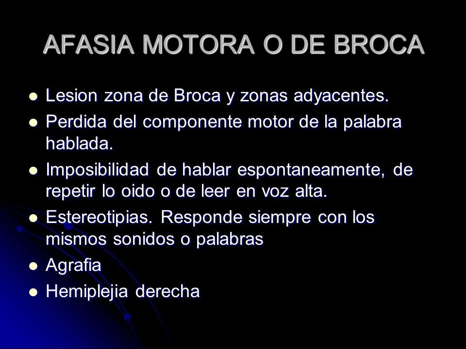 AFASIA MOTORA O DE BROCA Lesion zona de Broca y zonas adyacentes. Lesion zona de Broca y zonas adyacentes. Perdida del componente motor de la palabra