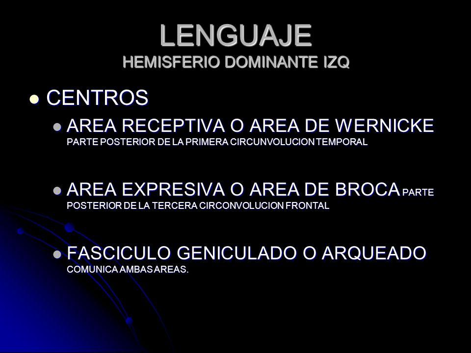 LENGUAJE HEMISFERIO DOMINANTE IZQ CENTROS CENTROS AREA RECEPTIVA O AREA DE WERNICKE PARTE POSTERIOR DE LA PRIMERA CIRCUNVOLUCION TEMPORAL AREA RECEPTI