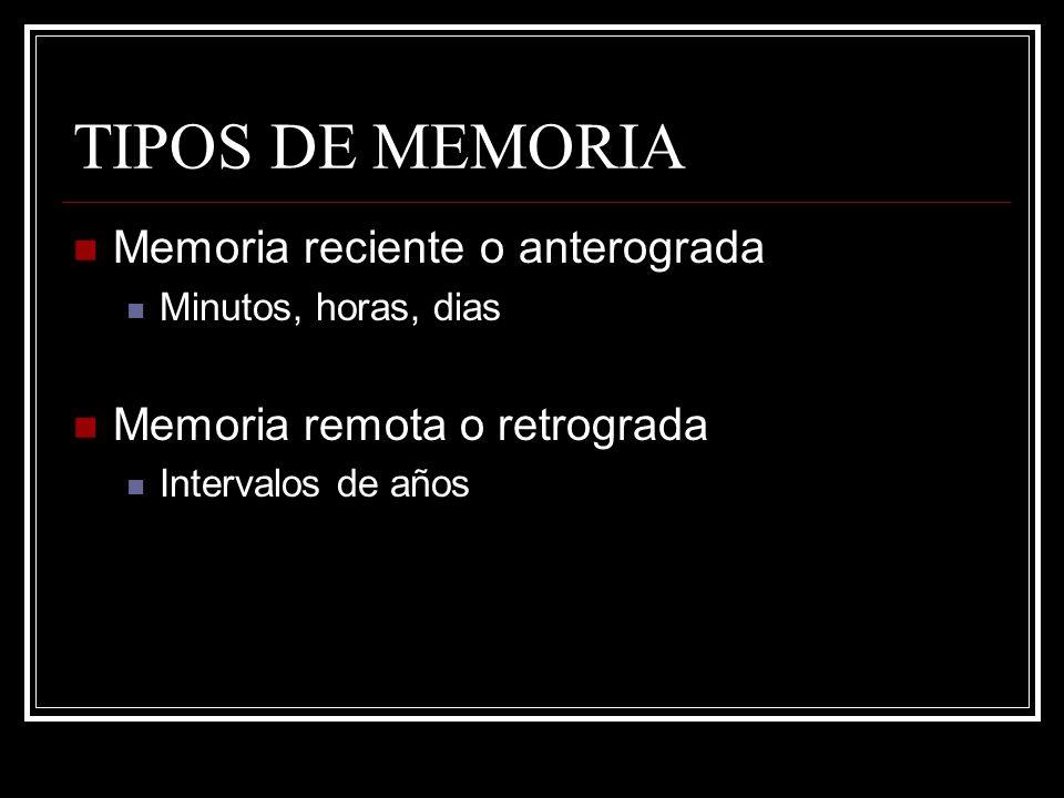 TIPOS DE MEMORIA Memoria reciente o anterograda Minutos, horas, dias Memoria remota o retrograda Intervalos de años