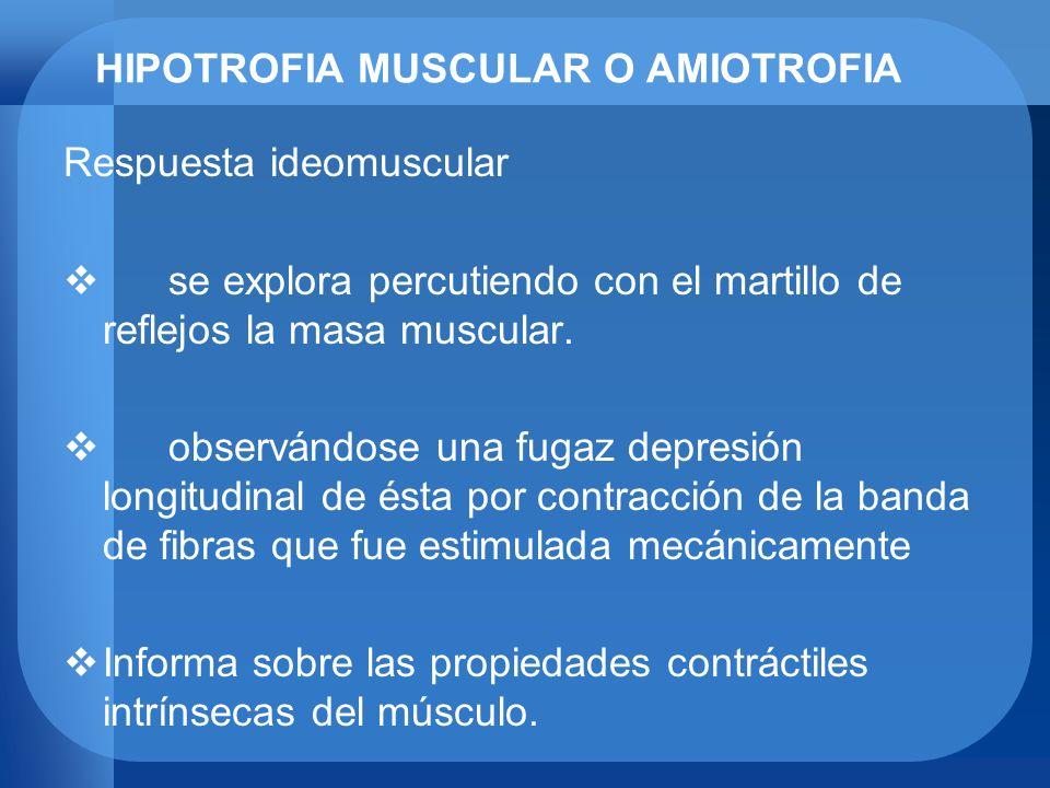 HIPOTROFIA MUSCULAR O AMIOTROFIA Respuesta ideomuscular se explora percutiendo con el martillo de reflejos la masa muscular. observándose una fugaz de