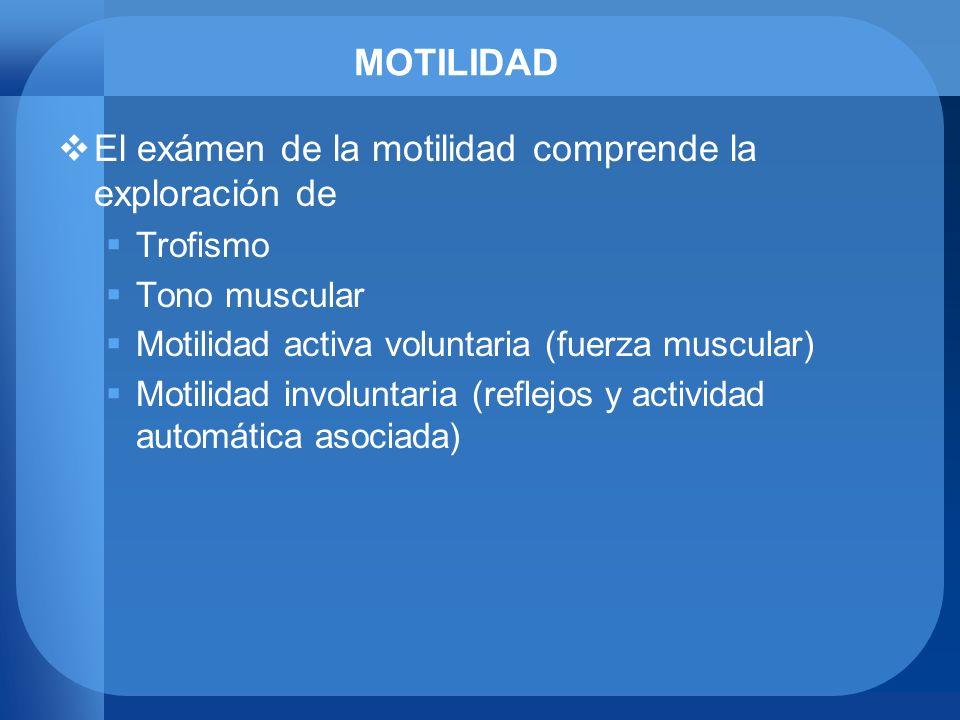 MOTILIDAD El exámen de la motilidad comprende la exploración de Trofismo Tono muscular Motilidad activa voluntaria (fuerza muscular) Motilidad involun