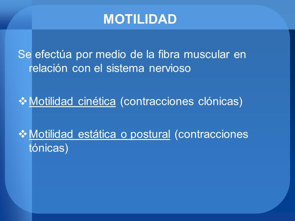 MOTILIDAD Motilidad cinética (contracciones clónicas) Produce traslación de una parte o de la totalidad del cuerpo ACTOS MOTORES VOLUNTARIOS (vía motora piramidal) ACTOS MOTORES INVOLUNTARIOS (vía motora extrapiramidal –Móv.