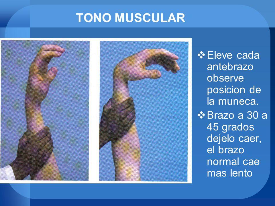 TONO MUSCULAR Eleve cada antebrazo observe posicion de la muneca. Brazo a 30 a 45 grados dejelo caer, el brazo normal cae mas lento