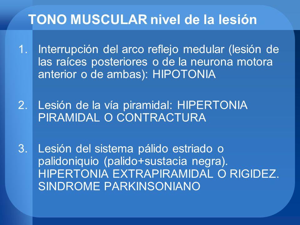 TONO MUSCULAR nivel de la lesión 1.Interrupción del arco reflejo medular (lesión de las raíces posteriores o de la neurona motora anterior o de ambas)