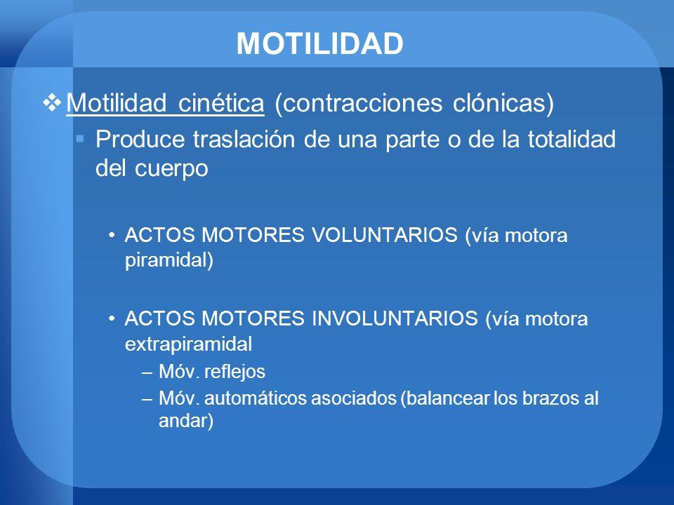 MOTILIDAD Motilidad cinética (contracciones clónicas) Produce traslación de una parte o de la totalidad del cuerpo ACTOS MOTORES VOLUNTARIOS (vía moto