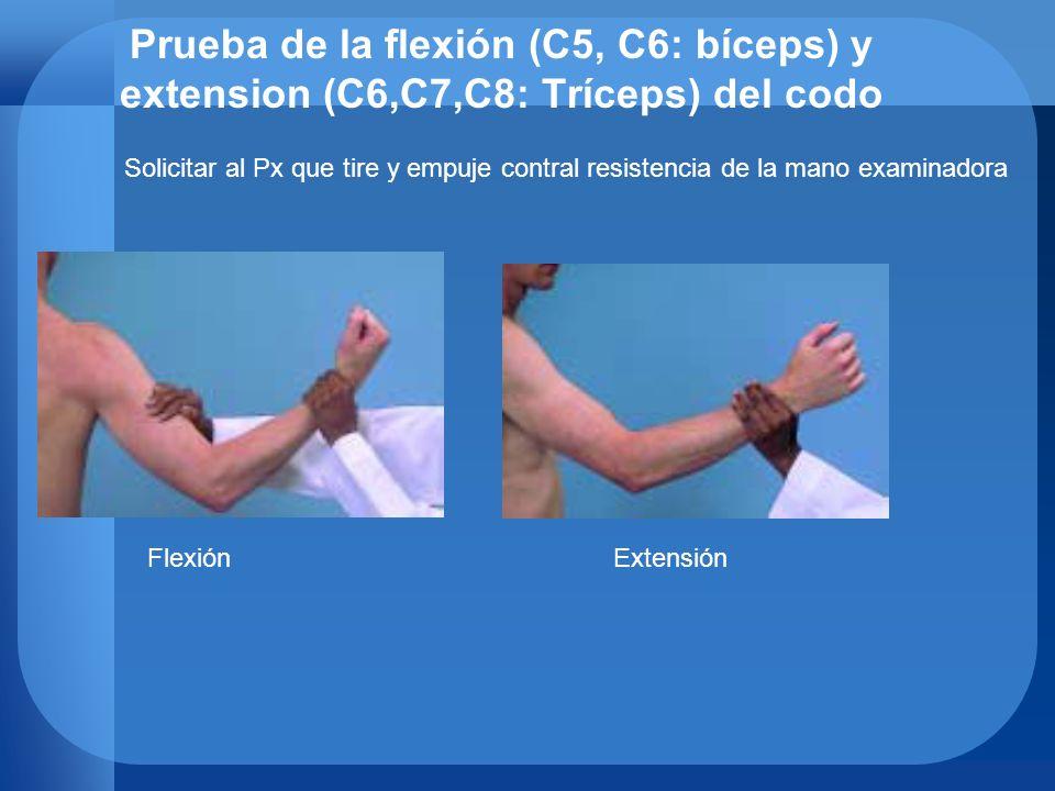 Prueba de la flexión (C5, C6: bíceps) y extension (C6,C7,C8: Tríceps) del codo FlexiónExtensión Solicitar al Px que tire y empuje contral resistencia