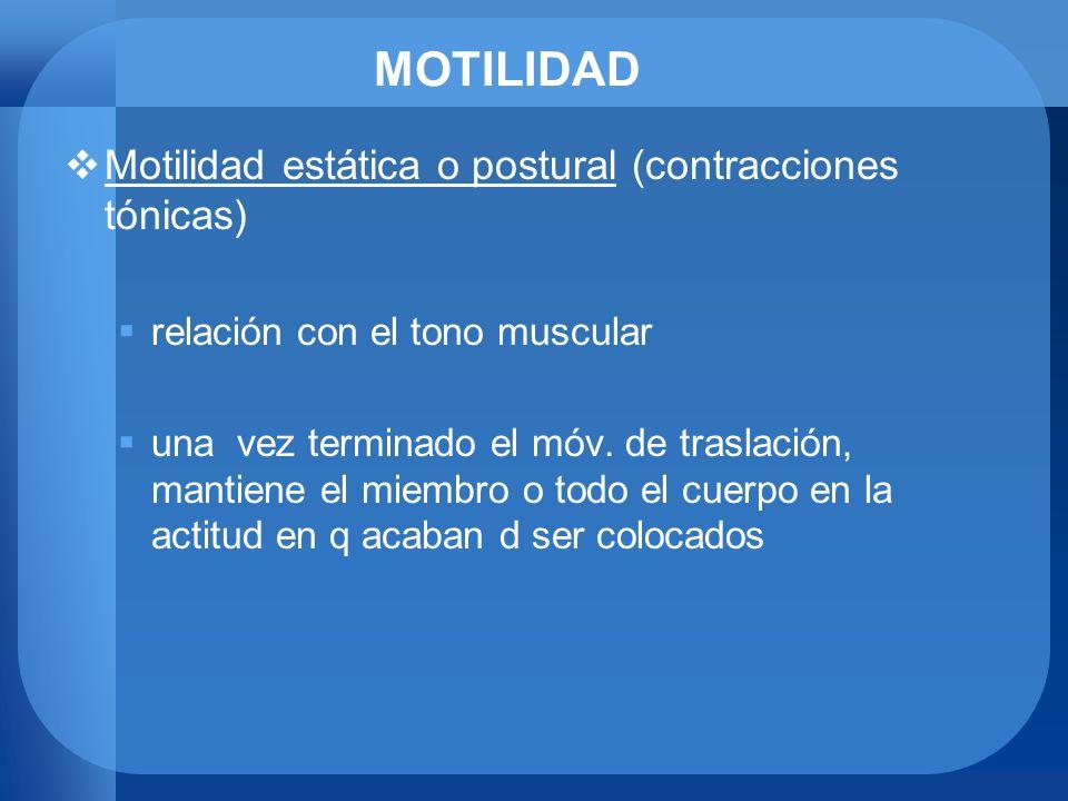 MOTILIDAD Motilidad estática o postural (contracciones tónicas) relación con el tono muscular una vez terminado el móv. de traslación, mantiene el mie