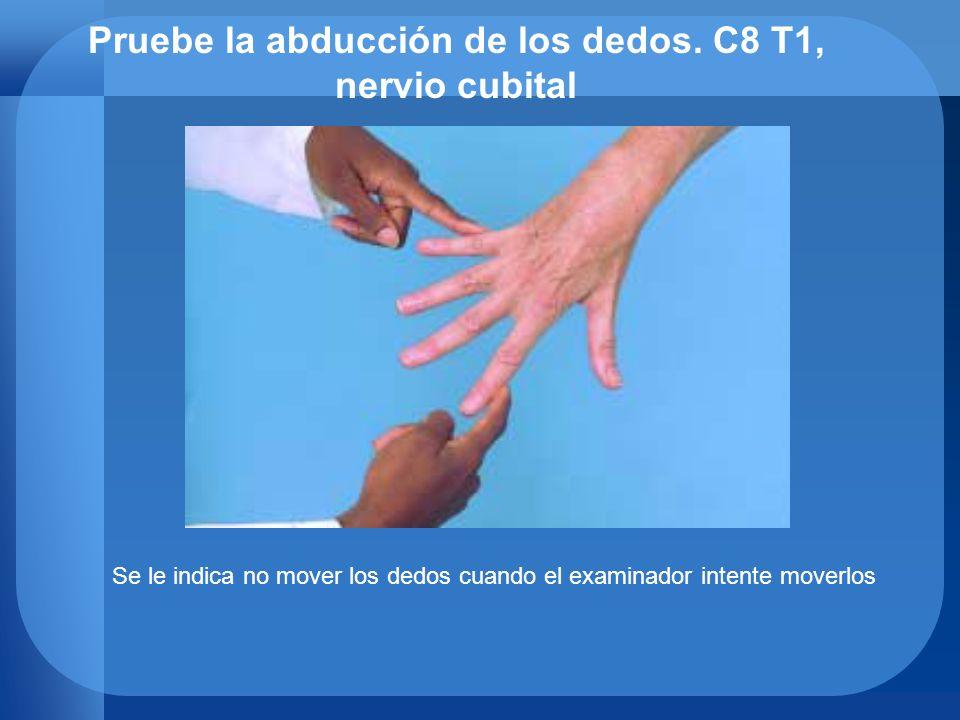 Pruebe la abducción de los dedos. C8 T1, nervio cubital Se le indica no mover los dedos cuando el examinador intente moverlos