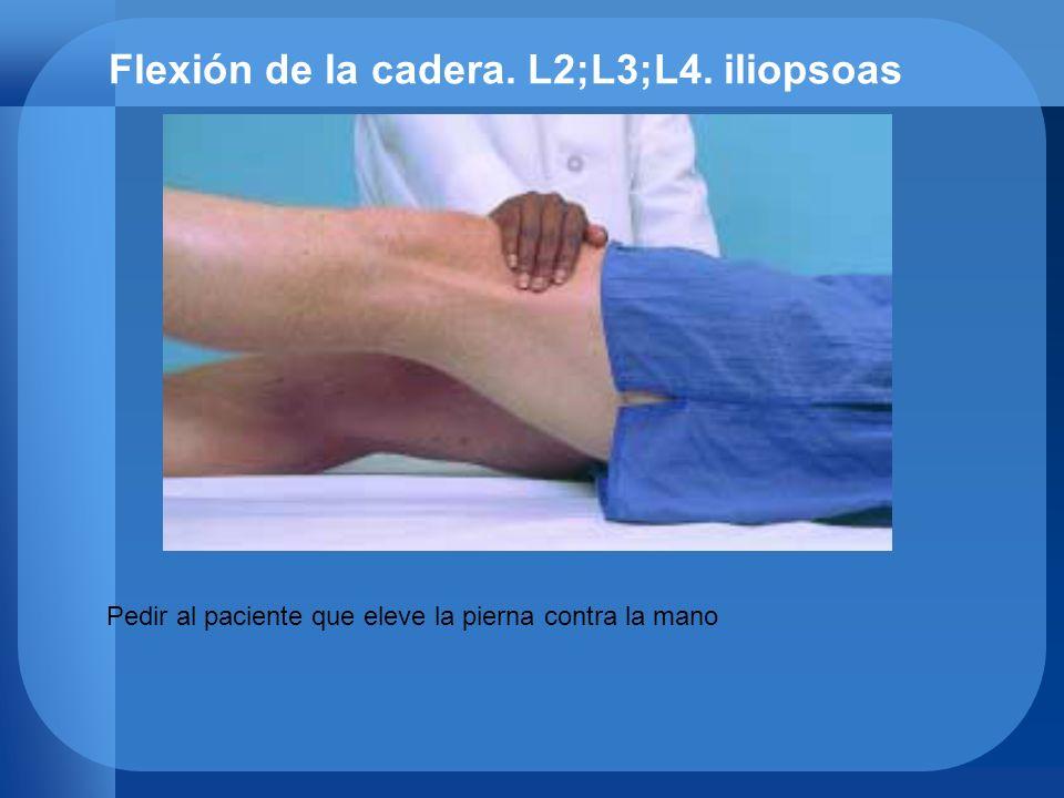 Flexión de la cadera. L2;L3;L4. iliopsoas Pedir al paciente que eleve la pierna contra la mano