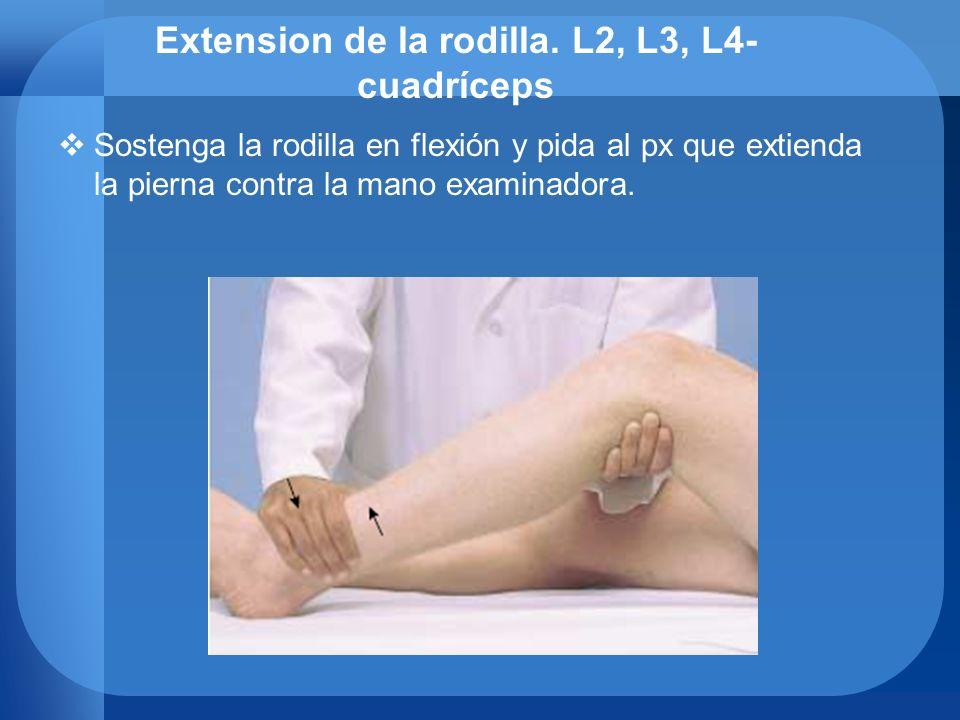Extension de la rodilla. L2, L3, L4- cuadríceps Sostenga la rodilla en flexión y pida al px que extienda la pierna contra la mano examinadora.