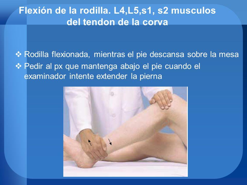 Flexión de la rodilla. L4,L5,s1, s2 musculos del tendon de la corva Rodilla flexionada, mientras el pie descansa sobre la mesa Pedir al px que manteng
