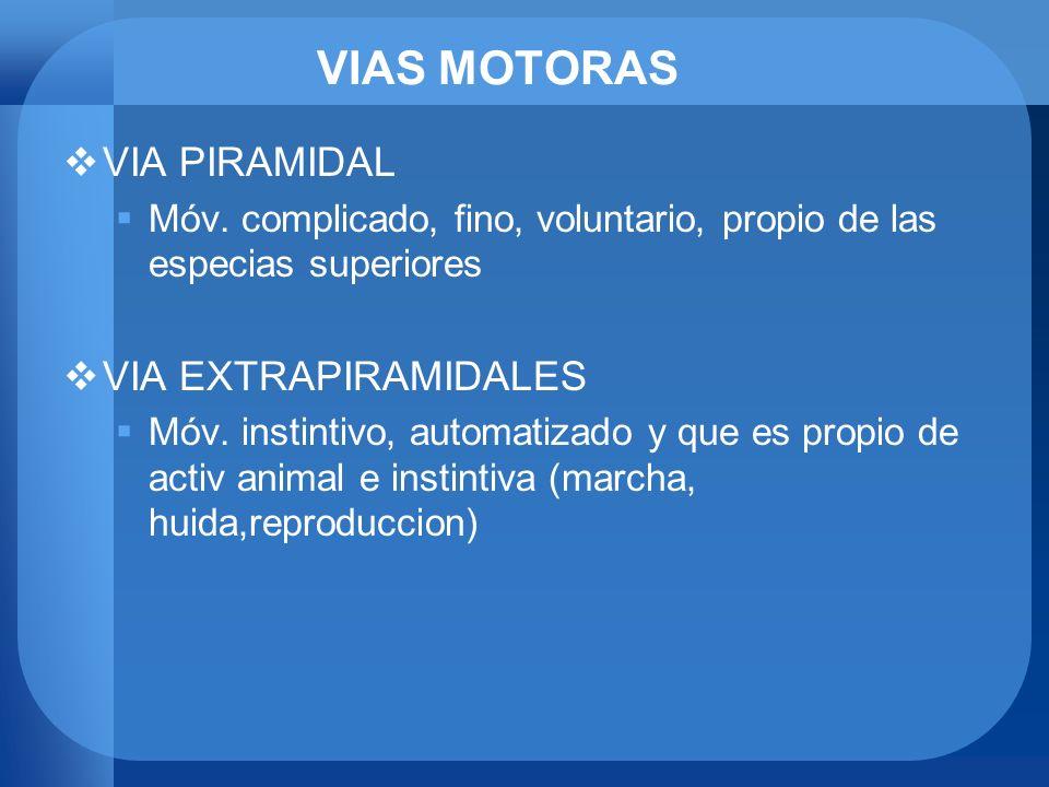 VIAS MOTORAS VIA PIRAMIDAL Móv. complicado, fino, voluntario, propio de las especias superiores VIA EXTRAPIRAMIDALES Móv. instintivo, automatizado y q