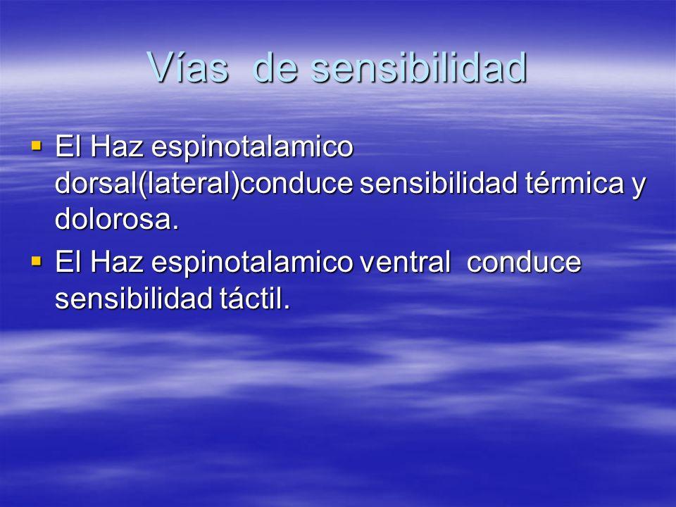 Vías de sensibilidad El Haz espinotalamico dorsal(lateral)conduce sensibilidad térmica y dolorosa. El Haz espinotalamico dorsal(lateral)conduce sensib